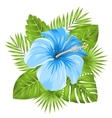 beautiful blue hibiscus flowers blossom vector image vector image