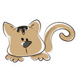 brown cat on white background vector image vector image