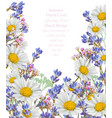 chamomile and lavender summer card vector image