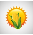 corn and sun icon vector image vector image
