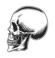 vintage human skull profile template vector image vector image