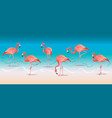 exotic pink flamingos walking on hot summer vector image vector image