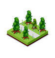 park road and trees isometric 3d icon vector image vector image