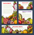 sketch posters of tropical exotic fruits vector image vector image