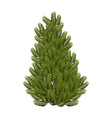 Christmas tree on white background Realistic vector image