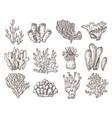 coral sketch natural corals sketching black vector image vector image
