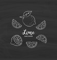 lime fruit drawing half and slice lemon vector image vector image