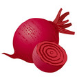 raw beetroot vector image vector image