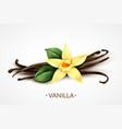 vanilla flower realistic image vector image