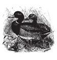 wild ducks vintage vector image vector image