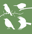 birds collection vector image