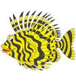 firefish vector image vector image