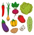 Fresh vegetables sketches for agriculture design vector image vector image