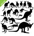 Kangaroo silhouettes vector image