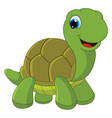 of cartoon turtle vector image vector image