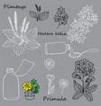 cough medicine vector image vector image