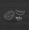 melon fruit drawing sketch melon with chalk on vector image vector image