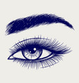 pen sketch of beautiful female eye vector image