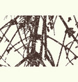 pine branches texture for background vector image vector image
