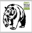 black bear - in realistic vector image vector image