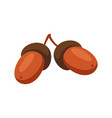 cartoon ripe acorns vector image