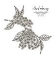 bird cherry tree branch hand drawn bird-cherry vector image