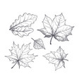 fall autumn season leaves sketch outline vector image