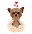 Yorkshire Terrier in love vector image vector image