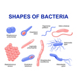 bacteria vector image vector image