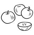 black and white apple set using doodle art or vector image