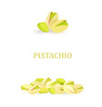 collection of banners with pistachios for your vector image vector image