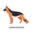 german shepherd large smart herding or stock dog vector image