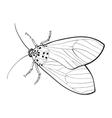 Top view of gray moth isolated sketch style vector image vector image