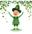leprechau with clovers vector image