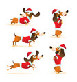 set cartoon brown dachshund in santas hat and vector image vector image
