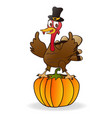 thanksgiving turkey on pumpkin vector image