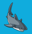 cartoon great white shark smiling vector image vector image