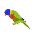 loriket bird icon vector image