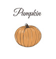 pumpkin is orange vector image