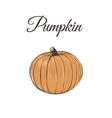 pumpkin is orange vector image vector image