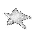 skin dead bear sketch vector image