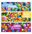 vitamin superfoods and natural organic berries vector image