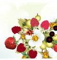 berries strawberry and flowers vector image