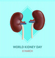 realistic detailed 3d kidney human internal organs vector image