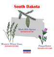 south dakota set usa official state symbols vector image