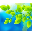 green leaves on the blue sky vector image vector image