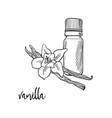 vanilla flower and bootle spicy vector image