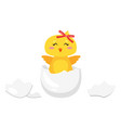 easter chick hatched from egg vector image