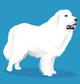 great pyrenees dog vector image vector image