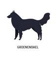 groenendael or belgian shepherd lovely dog of vector image vector image